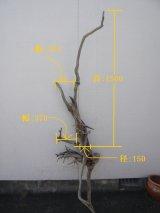 流木インテリア2