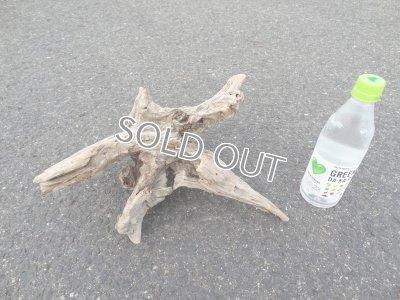 画像1: 流木インテリア007