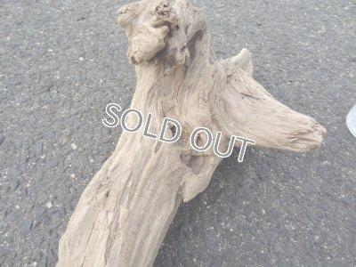 画像3: 流木インテリア015