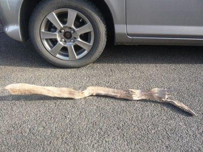 画像2: 流木インテリア022