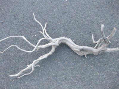 画像4: 流木インテリア1703