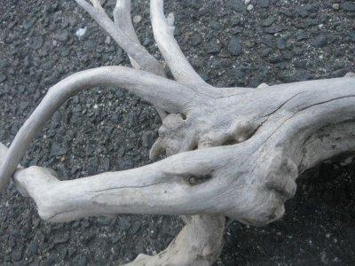 画像5: 流木インテリア1703
