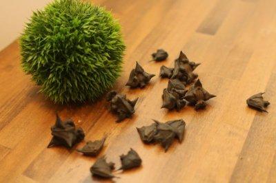 画像1: ヒシノミ 10個